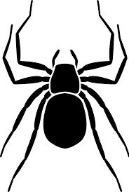 spinnen-en-mijten