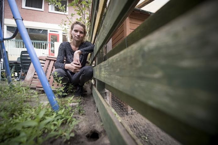 Rattenplaag teistert meerdere wijken in Hengelo