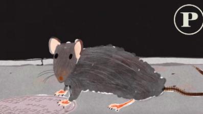 Waar de mens faalt, pakt de rat haar kans
