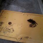 lijmplaten muizen