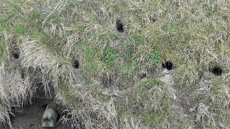 Toenemende rattenoverlast in Zeeland